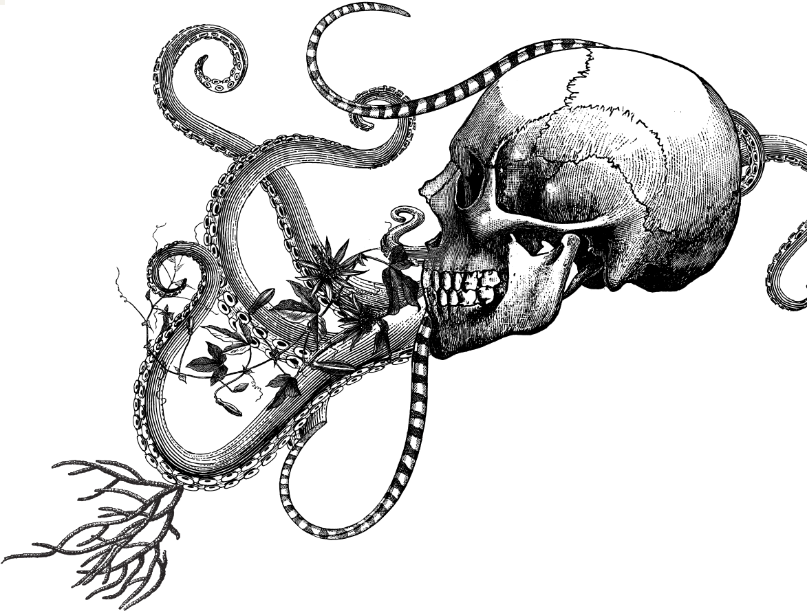 Skull and Tentacle Illustration